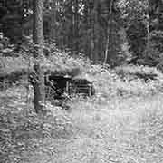 Rudnicki Forest: Courtesy of the Bart Family Collection